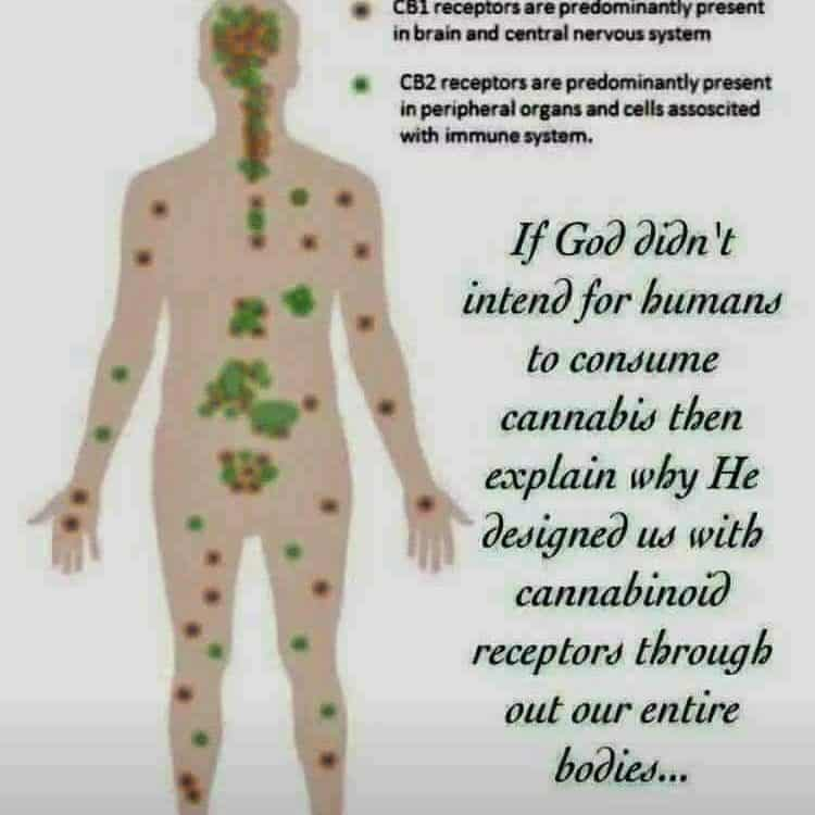 12 HempWorx CBD Frequently Asked Questions